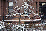 N.A., USA, Massachussetts, Boston, Back Bay, Townhouse Garden after a Snowstorm