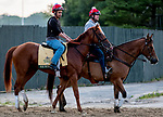 June 7, 2019 : Sir Winston leaves the track as horses prepare for the Belmont Stakes on Belmont Stakes Festival Weekend at Belmont Park in Elmont, New York. Scott Serio/Eclipse Sportswire/CSM