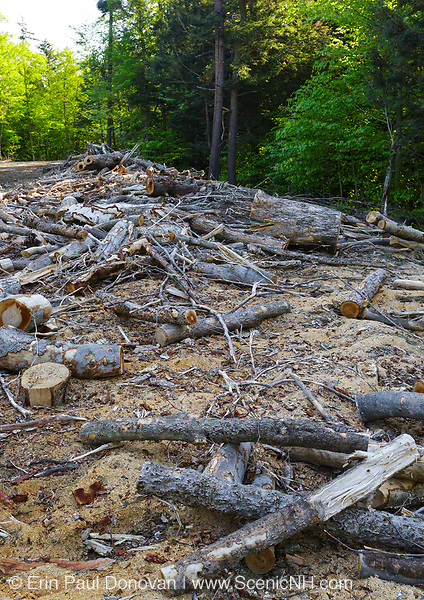 Landing / work area from the Kanc 7 Timber harvest project in the area of Forest Road 503 along the Kancamagus Scenic Byway (route 112) in the White Mountains, New Hampshire USA