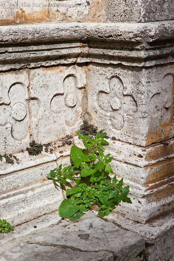 """""""Life on the Steps of St. Agostino""""<br /> Montepulciano, Italy<br /> 2015<br /> <br /> A wild plant takes root on the old steps of Saint Agostino in the small, medieval, hilltop town of Montepulciano."""