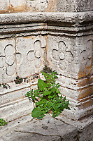 """Life on the Steps of St. Agostino""<br />