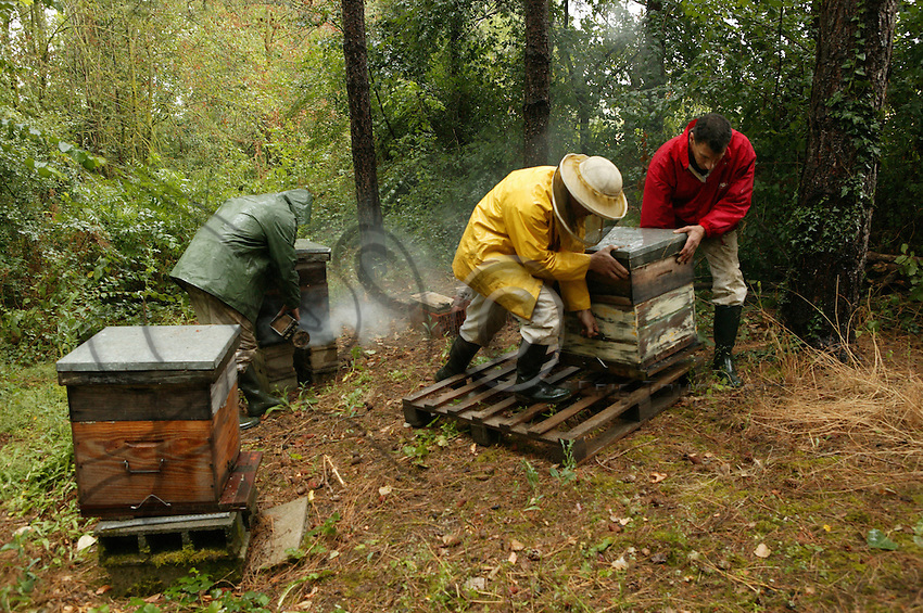 An apiary in the Pyrenees. The hives are taken into the mountains in May, and brought down to the lower elevations again in September. Rhododendron and heather are the principal sources for mono-floral honeys.