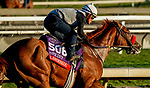 October 26, 2019 : Breeders' Cup Sprint entrant Landeskog, trained by Doug F. O'Neill, exercises in preparation for the Breeders' Cup World Championships at Santa Anita Park in Arcadia, California on October 26, 2019. Scott Serio/Eclipse Sportswire/Breeders' Cup/CSM