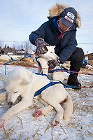 Veterinarian William Liska of Texas examines a Robert Nelson dog at the Shageluk checkpoint during Iditarod 2009
