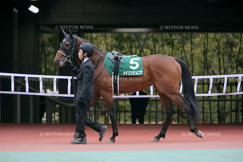 Mayson Junior,<br /> MARCH 18, 2017 - Horse Racing :<br /> Mayson Junior is led through the paddock before the Chunichi Sports Sho Falcon Stakes at Chukyo Racecourse in Aichi, Japan. (Photo by Eiichi Yamane/AFLO)