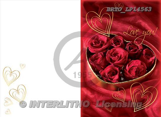 Alfredo, VALENTINE, photos, BRTOLP14563,#V#