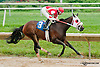 War Prospector winning at Delaware Park on 8/1/13
