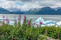 Summer landscape of Ice bergs in Inner Lake George with fireweed.  Chugach Mountians in the background.                               Photo by Jeff Schultz/SchultzPhoto.com  (C) 2018  ALL RIGHTS RESERVED<br /> <br /> Bill Daly Photo Tour July 20188
