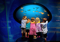 Visitors to Charlotte's Discovery Place museum check out World Alive, the museum's exhibit with an aquarium, a rainforest, a biodiversity gallery and two hands-on labs created to inspire inquiry-based  learning. Discovery Place, Charlotte NC's interactive children's museum, unveiled its interactive exhibits and hands-on activities in June 2010. Renovations of the popular family museum were made possible by the City of Charlotte, the Arts and Science Council and private donations. Discovery Place museum has age-appropriate exhibits for kids of all ages.