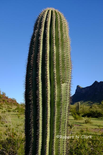 Picacho Peak State Park and campground in Arizona
