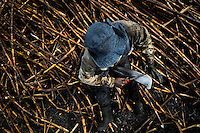 A sugar cane cutter sharpens his machete in a field near Florida, Valle del Cauca, Colombia, 30 May 2012. The Cauca River valley is the booming centre of agriculture and sugar cane cultivation in Colombia. Although the main part of the crop is still refined into a sugar, the global demand of biofuel and ethanol has intensified the sugar cane production in the last years. 85 percent of Colombia's cane crop is still harvested the manual way, employing approximately 30,000 workers. Working six days a week, under harsch labor conditions, the sugar cane cutters earn $4 for every ton of cane they cut, with no access to social benefits due to the tricky system of intermediary contractors and cooperatives.