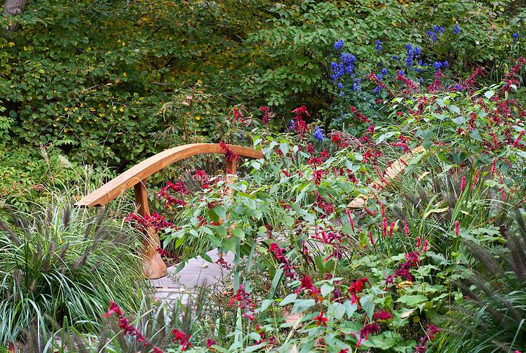 Salvia splendens 'Van-Houtteii' annual red flowers with bridge in garden, Aconitum, Pennisetum ornamental grass, Chanticleer