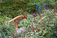 Salvia splendens 'Van-Houtteii' annual red flowers with bridge in garden, Aconitum, Pennisetum ornamental grass, Chanticleer