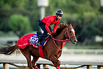 OCT 29: Breeders' Cup Sprint entrant Matera Sky, trained by Hideyuki Mori,  at Santa Anita Park in Arcadia, California on Oct 29, 2019. Evers/Eclipse Sportswire/Breeders' Cup