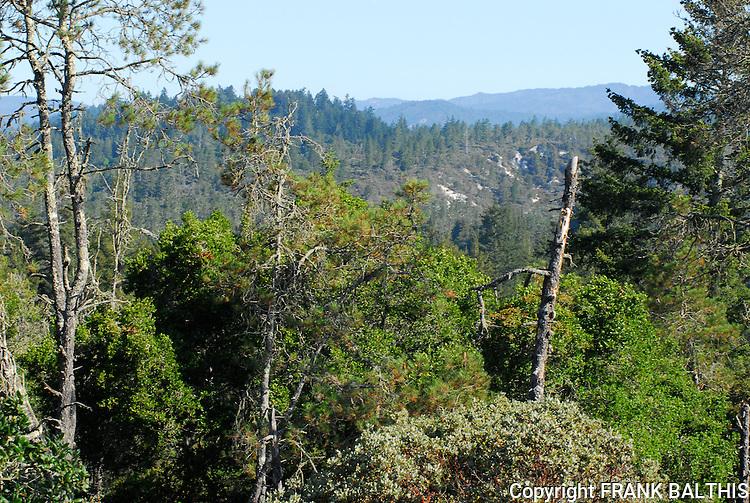 Henry Cowell Redwoods State Park, Felton