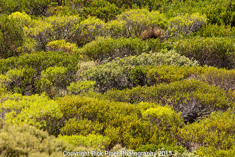 Coastal Greens - Cape Naturaliste coastal vegetation, Western Australia