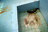 CHINA. Hubei Province. Wuhan. A salamander in an enclosure in Wuhan zoo. In many of China's 'second-tier' cities, away from the modern zoos in the megacities of Beijing and Shanghai, hide a plethora of smaller unknown zoos. In these zoos, what can only be described as animal abuse is subtly taking place in the form of deprivation of light, space, sanitation and social contact with other animals. Living in awful conditions, these animals spend there days entertaining tourists who seem oblivious to the animals' plight and squalid existence. 2008.