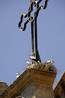 Storks nesting in church steeples. Llieda, Catalan,Spain