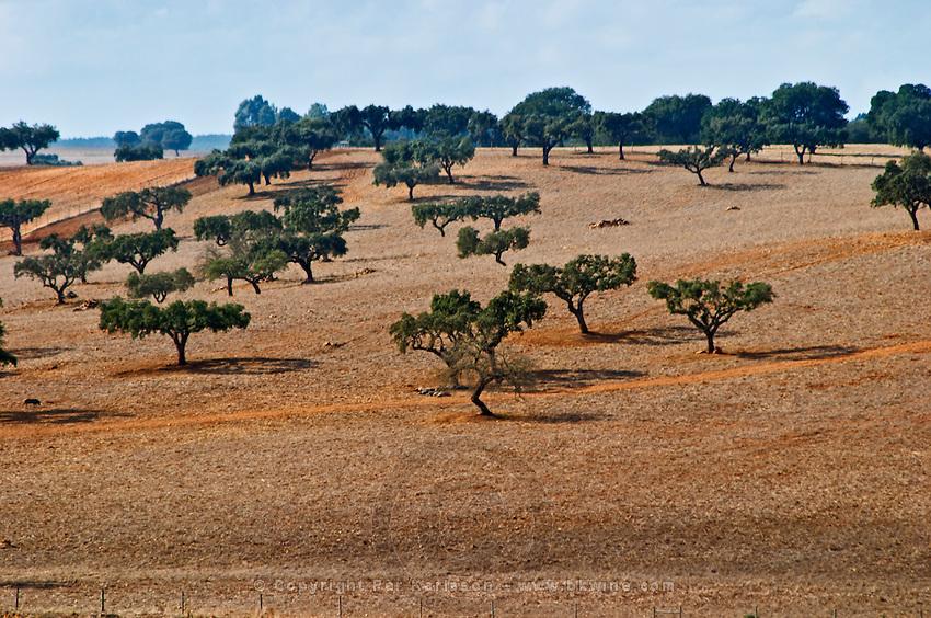 Dry, barren fields with oak trees. Herdade da Malhadinha Nova, Alentejo, Portugal