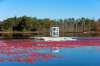 Cranberry harvester agitating a flooded bog, New Jersey, USA