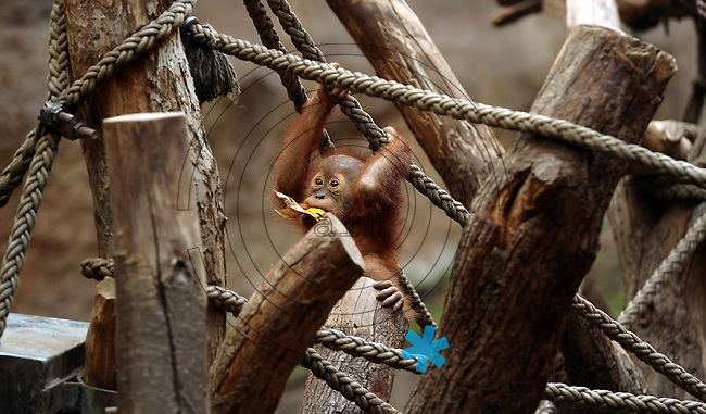 Pongoland Zoo Leipzig.  Foto: Norman Rembarz ..