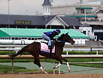 April 28, 2019 : Lady Apple works out at Churchill Downs, Louisville, Kentucky, preparing for a start in the Kentucky Oaks. Owner Phoenix Thoroughbred III and KatieRich Stables, trainer Steven M. Asmussen. By Curlin x Miss Mary Apples (Clever Trick)  Mary M. Meek/ESW/CSM