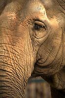 Elephant in Budapest Z0o & Botanical Garden (F?városi Állat- és Növénykert) Hungary