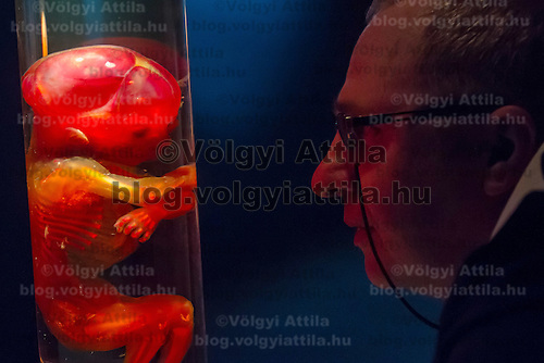 Visitor watches a preserved embryo body on display at an exhibition in Budapest, Hungary on April 02, 2012. ATTILA VOLGYI