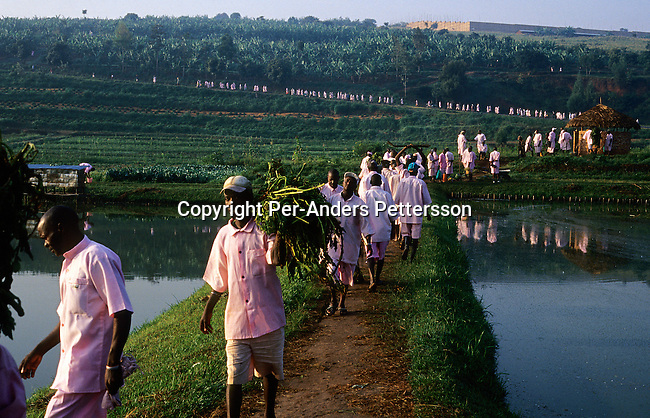 Unidentified prisoners accused of the Genocide in 1994, walk to work in a brick-making factory and fields on February 2, 2003 outside Butare Prison in Butare, Rwanda. About 100.000 prisoners accused of the genocide are still in prison. About 800.000 mainly Tutsis and moderate Hutus were killed in about one hundred days in 1994. Rwanda is currently trying to cope with these huge problems and some prisoners that have confessed to crimes can be tried in village trials, known as Gacacas. (Photo by: Per-Anders Pettersson)