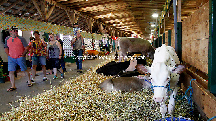 GOSHEN, CT - 30 JULY 2017 - 073017JW06.jpg -- crowds walk past relaxing cows Sunday afternoon during the Annual 4-H Fair.  Jonathan Wilcox Republican-American