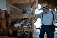 4415 / Meerschweinchen: AMERIKA, VEREINIGTE STAATEN VON AMERIKA,PENNSYLVANIA,  (AMERICA, UNITED STATES OF AMERICA), 14.09.2006: Meerschweinchenzucht. Nebenverdienst, Tierzucht,  Samuel Stolzfus  zuechtet Meerschweinchen fuer den Tierhandel. Samuel Stolzfus war Farmer ist jetzt aber zu alt und verdient etwas Geld mit dieser Arbeit.