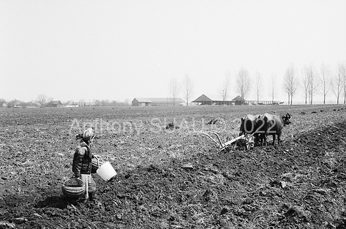 Simbata De Jos, Transylvania<br /> Romania<br /> April 25, 1992<br /> <br /> Cultivating and planting