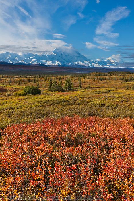 Dwarf birch and the summit of Denali, Denali National Park, Alaska.