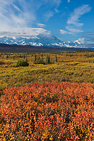 Dwarf birch and the summit of Denali, Denali National Park, Alaska.