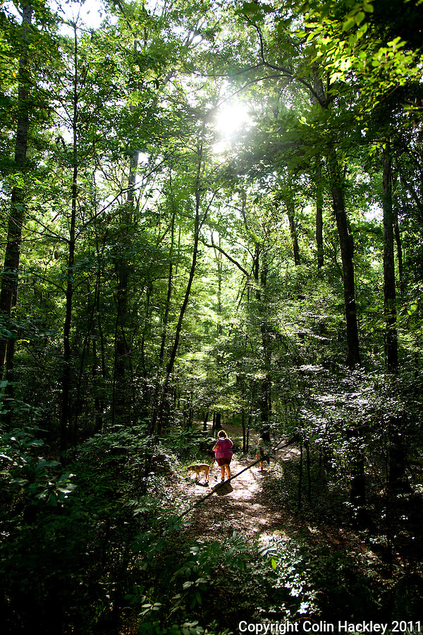 TOM BROWN PARK: Wooded trails near the dog park are a popular place for pets and owners to cool down..COLIN HACKLEY PHOTO