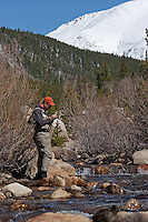 Greenback Cutthroat Stream, RMNP, Colorado