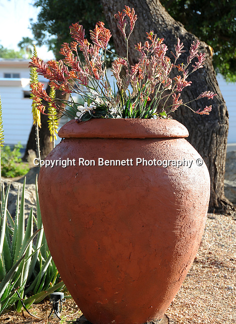 "Jar of flowers Palm Springs California, Fine art Photography and Stock Photography by Ronald T. Bennett Photography ©, FINE ART and STOCK PHOTOGRAPHY FOR SALE, CLICK ON  ""ADD TO CART"" FOR PRICING,"