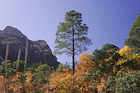 Mountains and canyon Ponderosa Pine(Pinus ponderosa), Bigtooth Maples (Acer grandidentatum) fallcolors, McKittrick Canyon, Guadalupe Mountains National Park, Texas, USA, November 2005