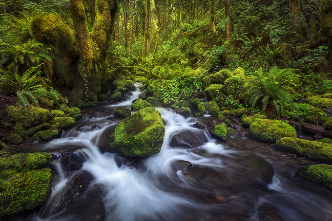 Cascades through mossy green foliage in Oregon's Columbia Gorge.