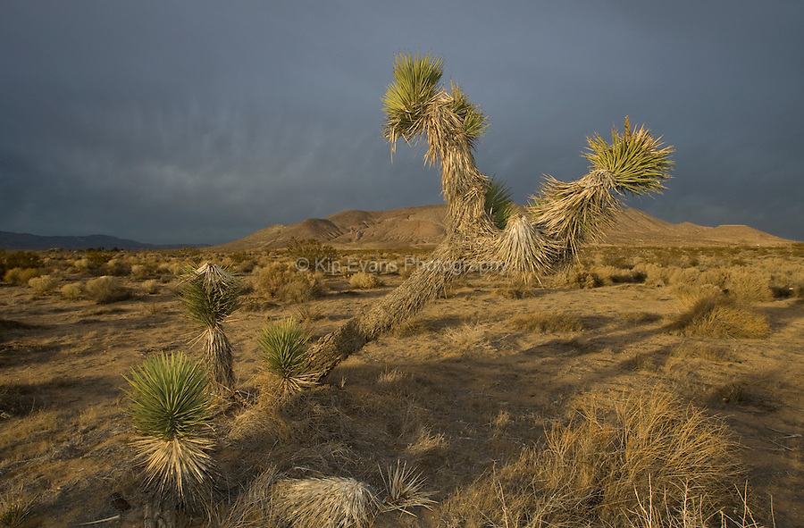 Rain and storm clouds in the Mojave Desert in California.