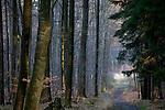 Europa, DEU, Deutschland, Nordrhein Westfalen, NRW, Rheinland, Siebengebirge, Koenigswinter, Waldweg am Oelberg, Kategorien und Themen, Natur, Umwelt, Landschaft, Jahreszeiten, Stimmungen, Landschaftsfotografie, Landschaften, Landschaftsphoto, Landschaftsphotographie, <br /> <br /> [Fuer die Nutzung gelten die jeweils gueltigen Allgemeinen Liefer-und Geschaeftsbedingungen. Nutzung nur gegen Verwendungsmeldung und Nachweis. Download der AGB unter http://www.image-box.com oder werden auf Anfrage zugesendet. Freigabe ist vorher erforderlich. Jede Nutzung des Fotos ist honorarpflichtig gemaess derzeit gueltiger MFM Liste - Kontakt, Uwe Schmid-Fotografie, Duisburg, Tel. (+49).2065.677997, archiv@image-box.com, www.image-box.com]