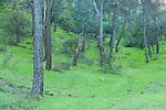 Mediterranean Forest, Sierra de Andujar Natural Park, Sierra Morena, Andalucia, Spain