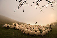 Basque shepherd transhumance