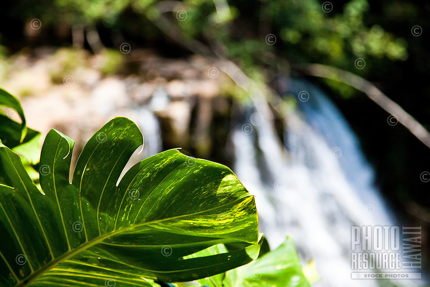 Close up of leaf with waterfall in the background