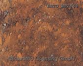 Alfredo, STILL LIFE STILLEBEN, NATURALEZA MORTA, paintings+++++,BRTOWP2865,#i#, EVERYDAY ,Ochsengalle,oxgal,
