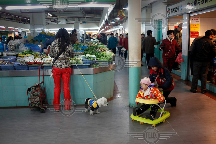 A small dog looks on as a boy pushes his brother's baby walker through a market.
