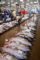 Fish Market / Auction