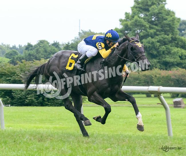 Gunny Roo winning at Delaware Park on 7/27/17