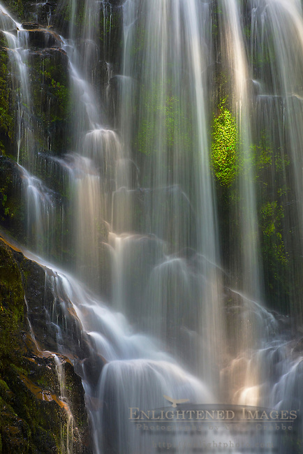 Berry Creek Falls (detail), Big Basin State Park, Santa Cruz County, California
