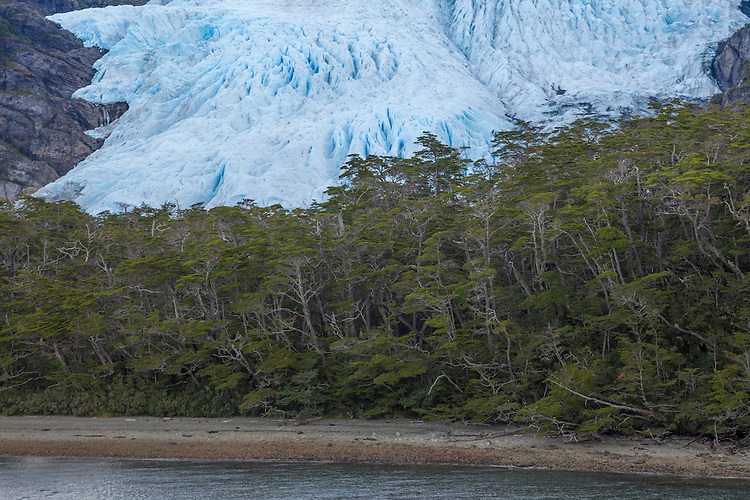 Patagonia's rainforests butt up against dramatic Aguila Glacier